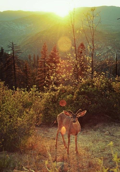 a deer and light {threedeadkings}