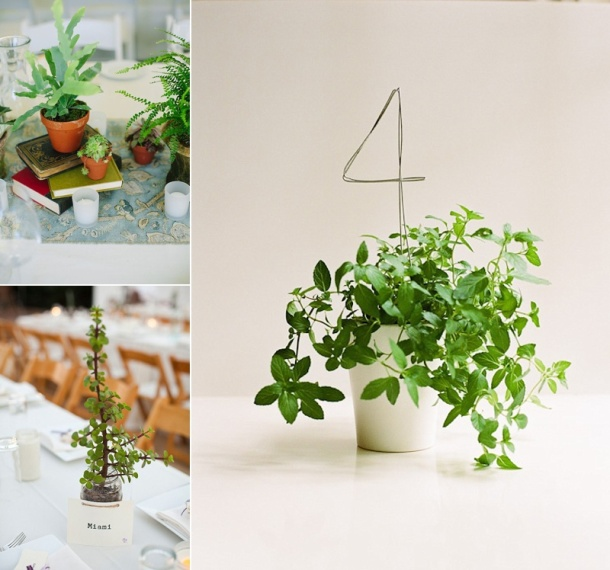 table plants
