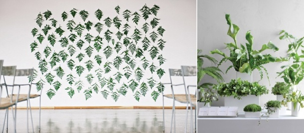backdrop plants